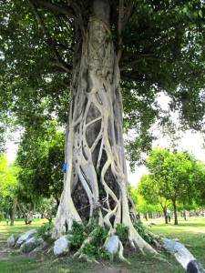 Cool tree at the Old Sukhothai ruins.