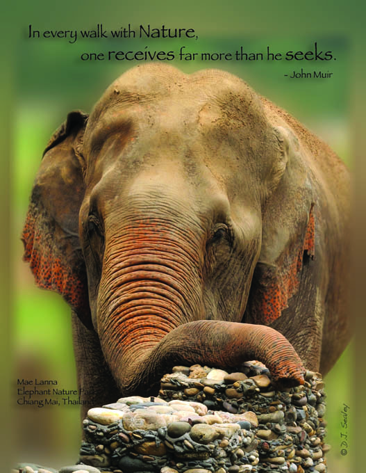Front of Postcard free with set of Six - Please Don't Ride the Elephants