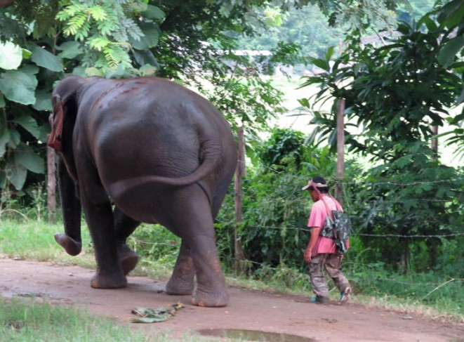 Mong Dee, mahout, and his elephant friend Sao Yai out for a walk. Elephant Nature Park, Chiang Mai, Thailand.