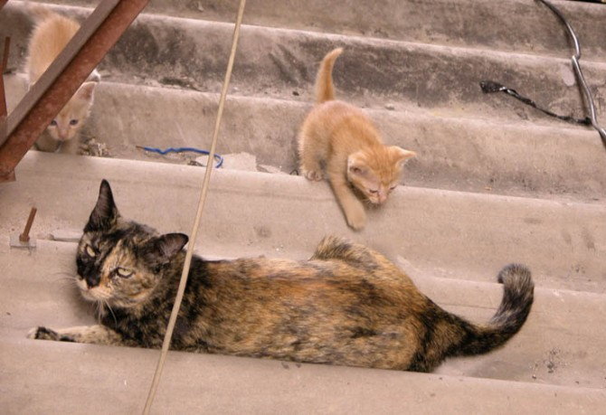 Mama cat and her babies on the rooftop next to our balcony, Chiang Mai.