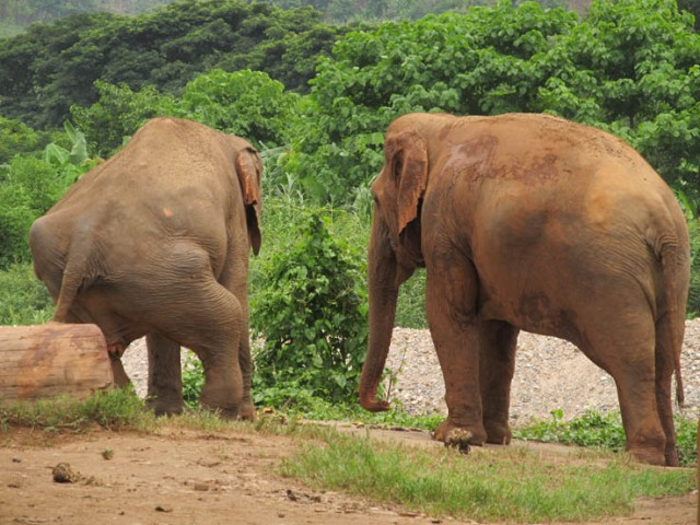 Medo (left) and Mae Lanna. From behind you can see the extent of Medo's injuries from the past.