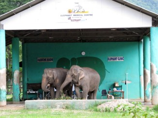 Two BFF's at the elephant clinic, Elephant Nature Park.