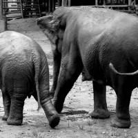 New Erawan Paradise Elephant Camp - Please Spread the News. :)