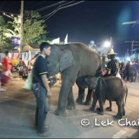 Elephants in the Street and How I Suck as a Westerner and a Tourist