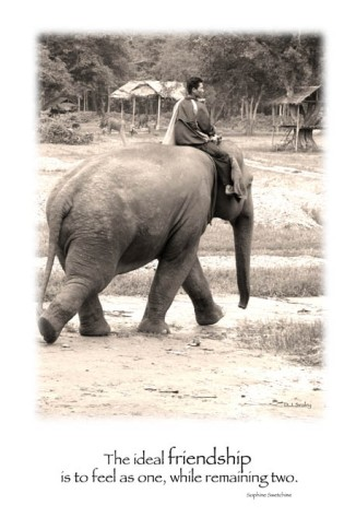 Hope and his mahout/minder Korn going for a wander at Elephant Nature Park, Chiang Mai, Thailand.
