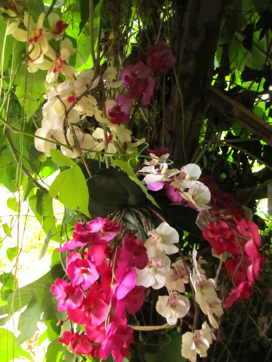 Delicious orchids abound at Elephant Nature Park.