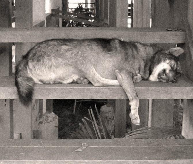 DogTiredSteps