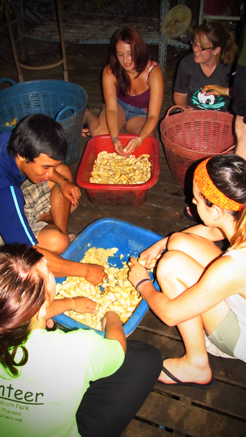 Volunteers play 'squish the bananas' for making banana balls.