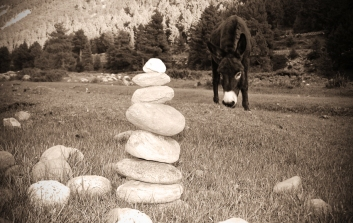 A member of the local transport purveyers inspects my rock stack. Chitkul, Himalayas.