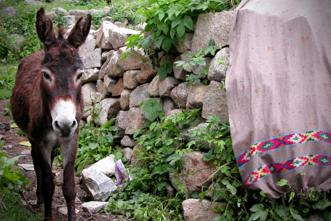Donkey with cobwebs all over his head. Lordy knows what he's been up to...