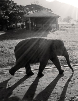 Early morning walk, Elephant Nature Park, Chiang Mai