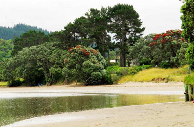 Estuary with flowering Pohutukawa trees.  Whangamata, Coromandel, North Island.