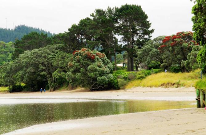 Estuary with flowering Pohutukawa trees.  Whangamata, Coromandel, North Island.