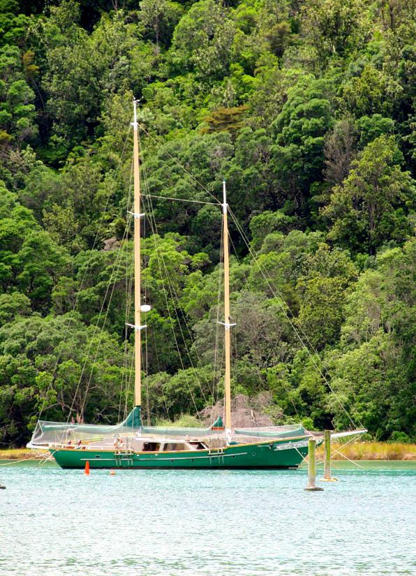 Yacht in harbour, Whangamata, Coromandel, North Island. The native bush goes right down to the waterline.