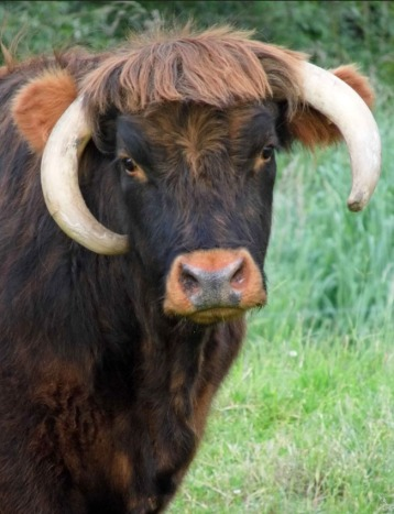 'Airy coo with a bad fringe cut.