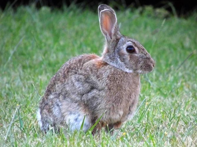 Rabbit3 72