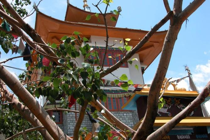 Aha! Momo territory. When I see these sorts of buildings, I start looking around for momo signs. Tibetan dumplings - yum!