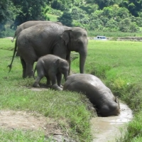 Camera Rambles: And Now For Some Elephants - Faa Mai Leads the Ditch Appreciation Project