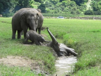 Faa Mai and Dok Mai having a blast ditch-diving at Elephant Nature Park.