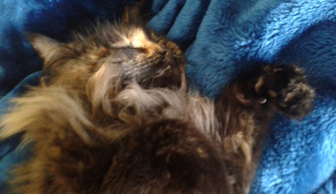 Smudge - Crown Princess of all mink blankets.