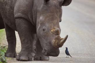 Photo courtesy of:  Arno Meintjes Wildlife