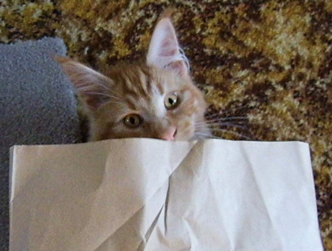 All paper bags belong to whoever is the ruler of the house.