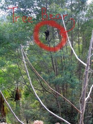 Spot the tree bear.