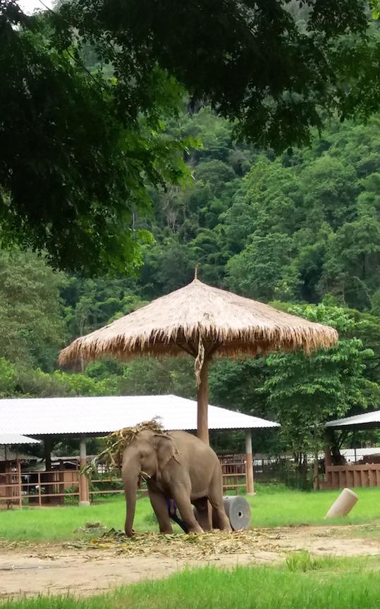 ele-umbrella-and-hat