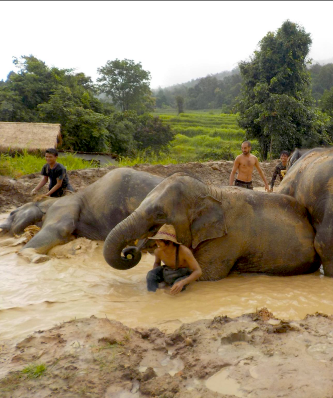 mahouts-behind-eles-in-mud
