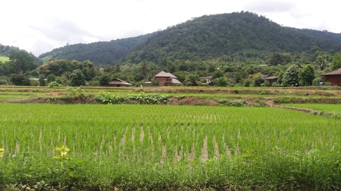 mountains-and-rice-paddies