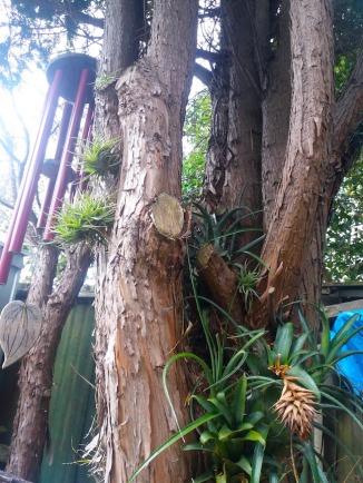 Tree triffids